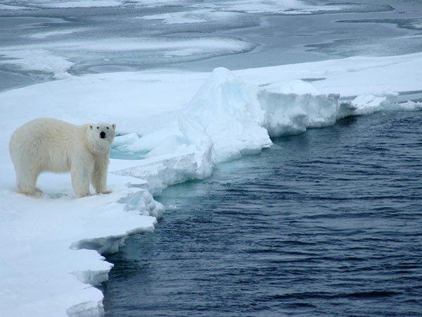 Руководитель РФодобрил строительство судов для сейсморазведки нашельфе Арктики