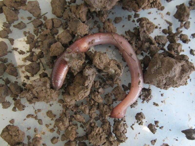 обнаружила личинки в земле снятся к чему повороте налево