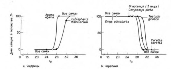 Связь между соотношением полов и температурой инкубации у некоторых видов ящериц и черепах.