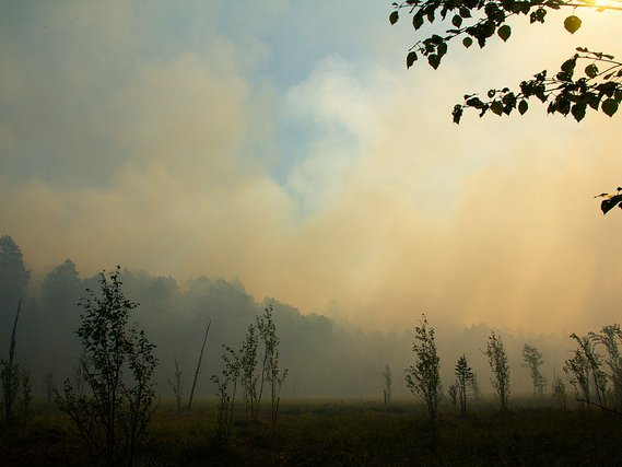 МЧС: особый режим из-за лесных пожаров введен восновной массе регионовРФ