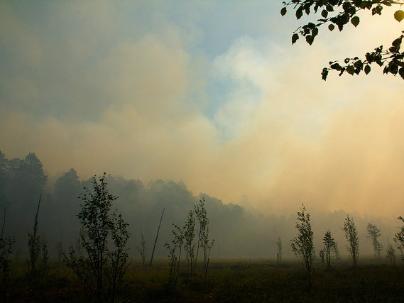 «Активное распространение пожаров вКрасноярском крае остановлено»— Минлесхоз