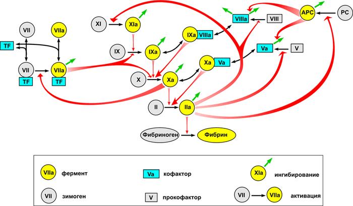 Схема взаимодействия факторов