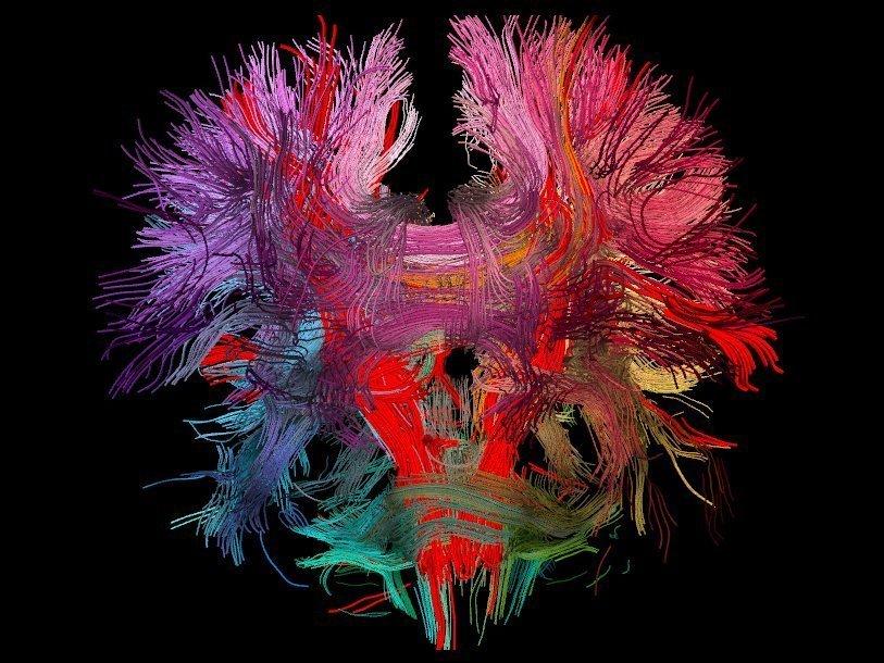 Картинки по запросу нейробиологические методы