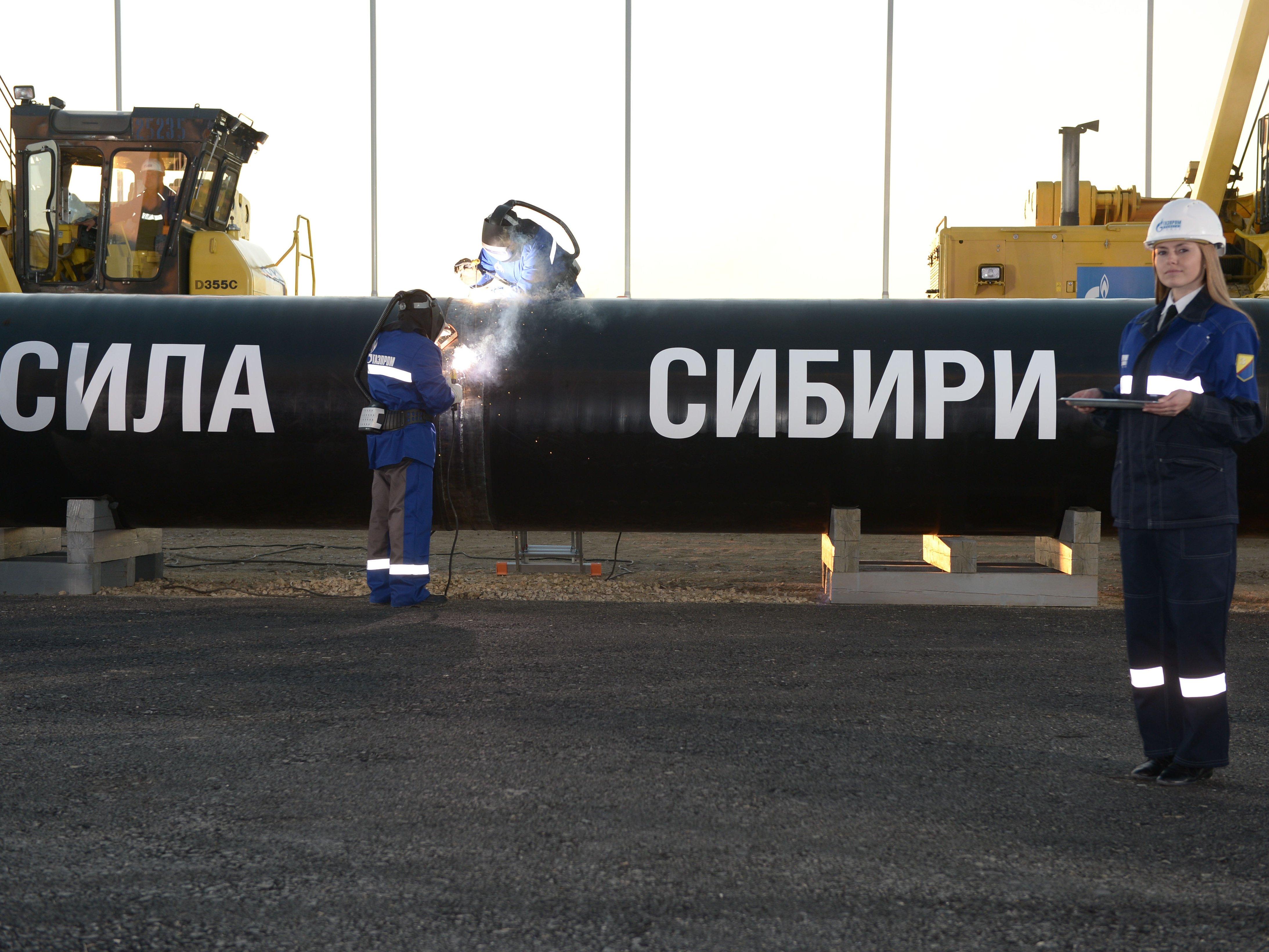 Победителем 40 тендеров «Газпрома» стала компания, вкоторой работают 5 человек