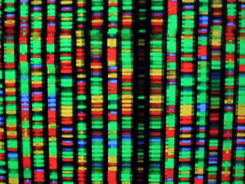 Учёные сообщили, что вихсилах расшифровать ДНК всех живых существ