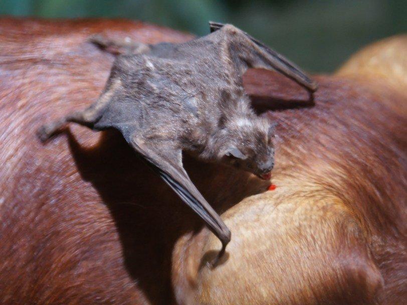 последнее картинки укусов летучих мышей день