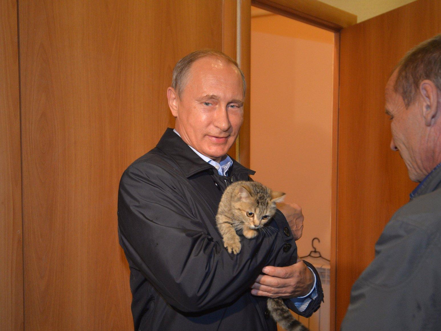Два пермских котика попали в 10-ку самых известных котов 2016 года