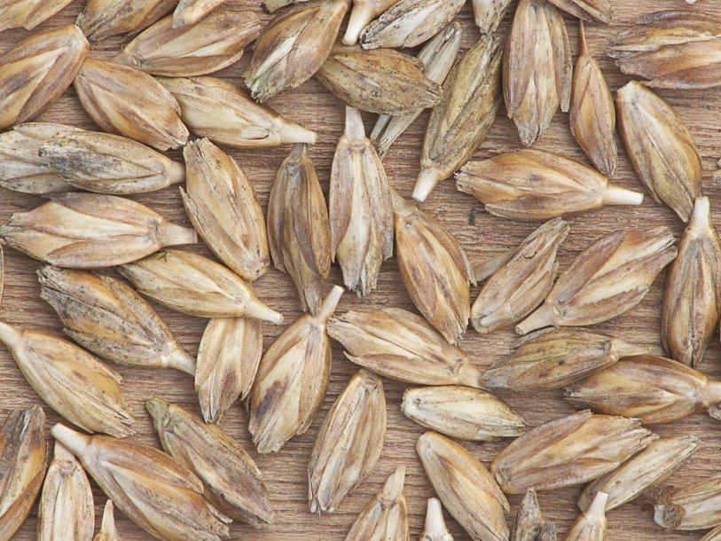 Египет снял ограничения наимпорт русской пшеницы