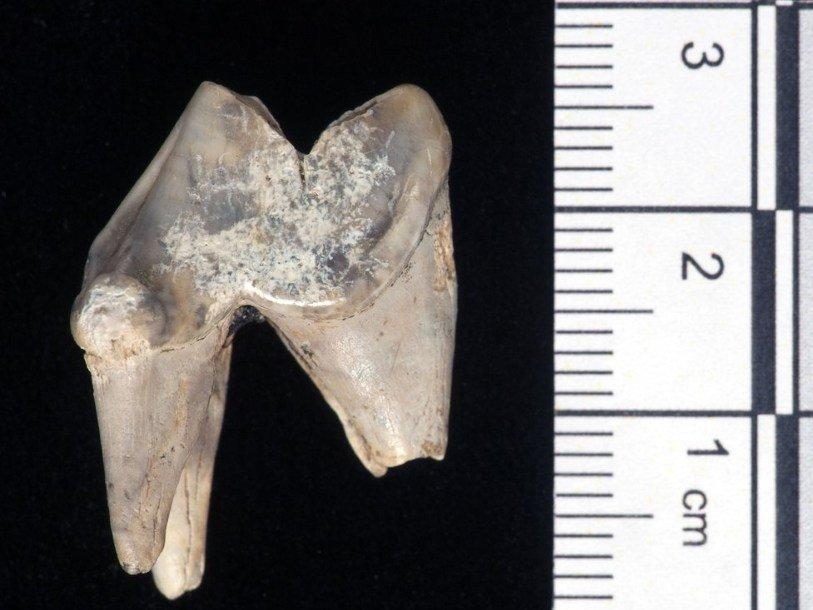 ВСтоунхендже отыскали останки древней домашней собаки