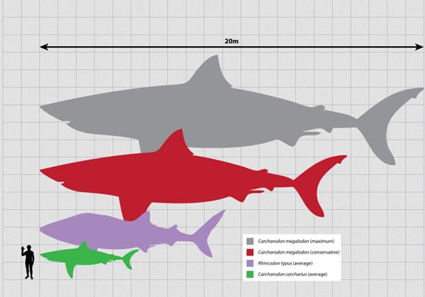 Зубы древних акул и мифология