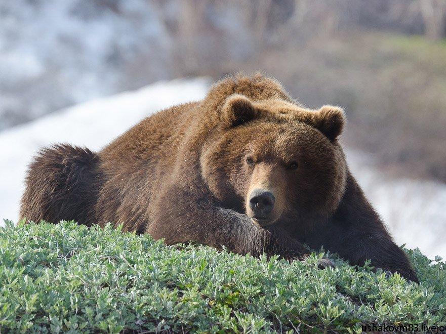 После расправы над медведем вЯкутии возбудили уголовное дело