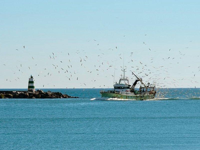 ФСБ пояснила запрет иностранных судов для рыболовов