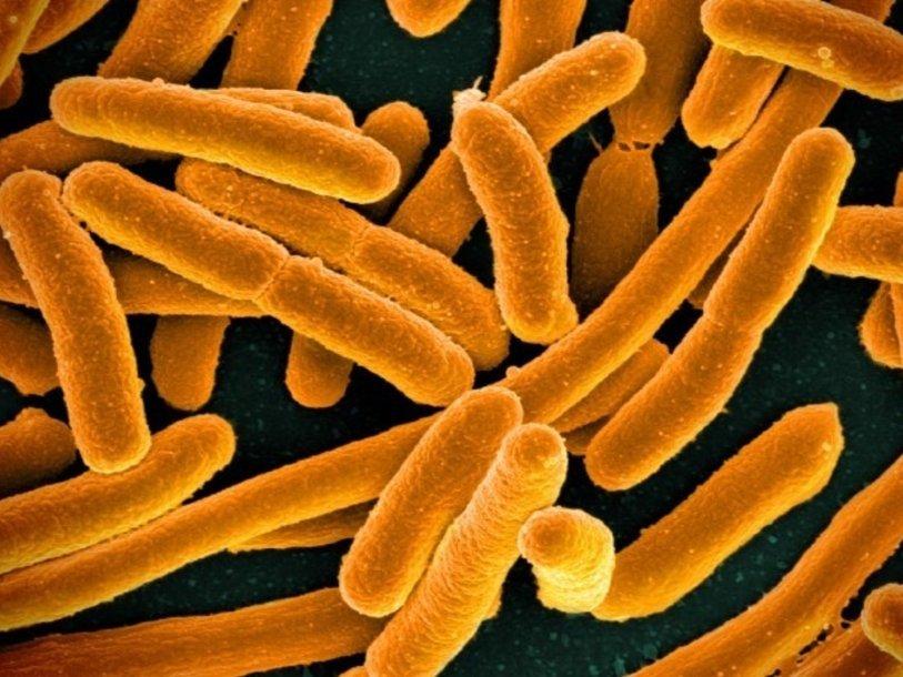 Создана мировая карта устойчивости кантибиотикам