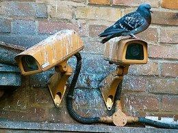 Городской голубь на камере наблюдения.