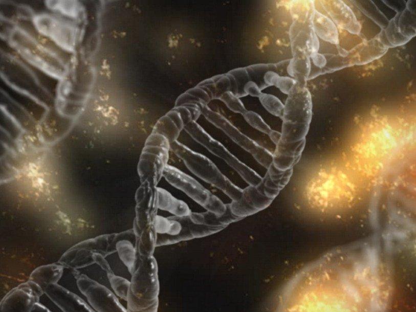 ДНК           Pixabay