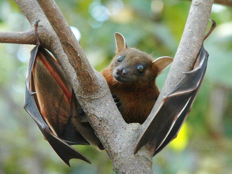 летучие мыши вьетнам
