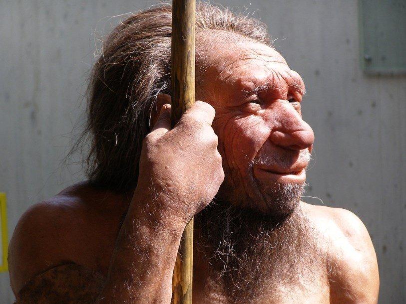 Реконструкция из Неандертальского музея в Германии