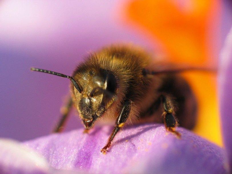 ВГермании загадочно пропали три четверти насекомых— Экологи впанике