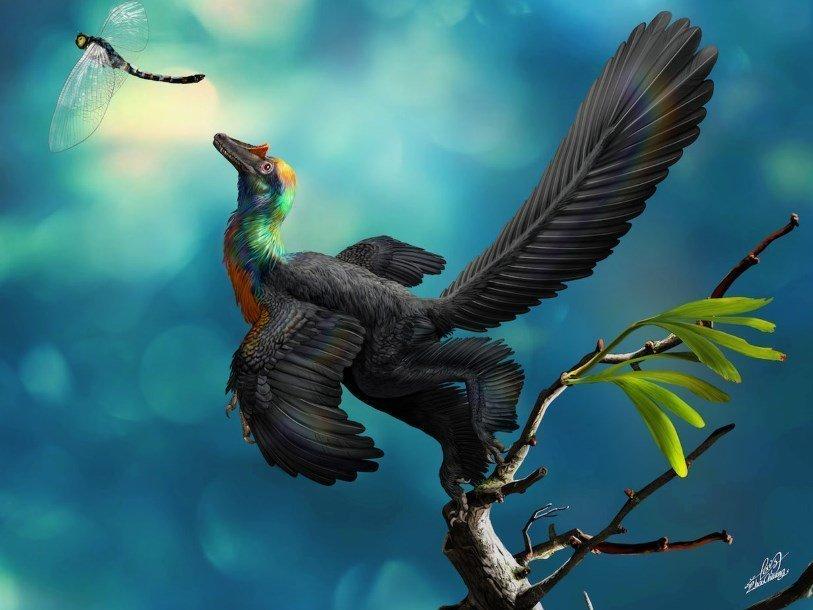 Китайские ученые описали динозавра с ярким оперением