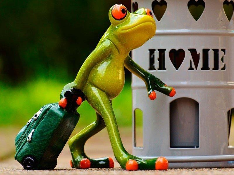 Открытка с лягушкой путешественницей, поздравление пасхой