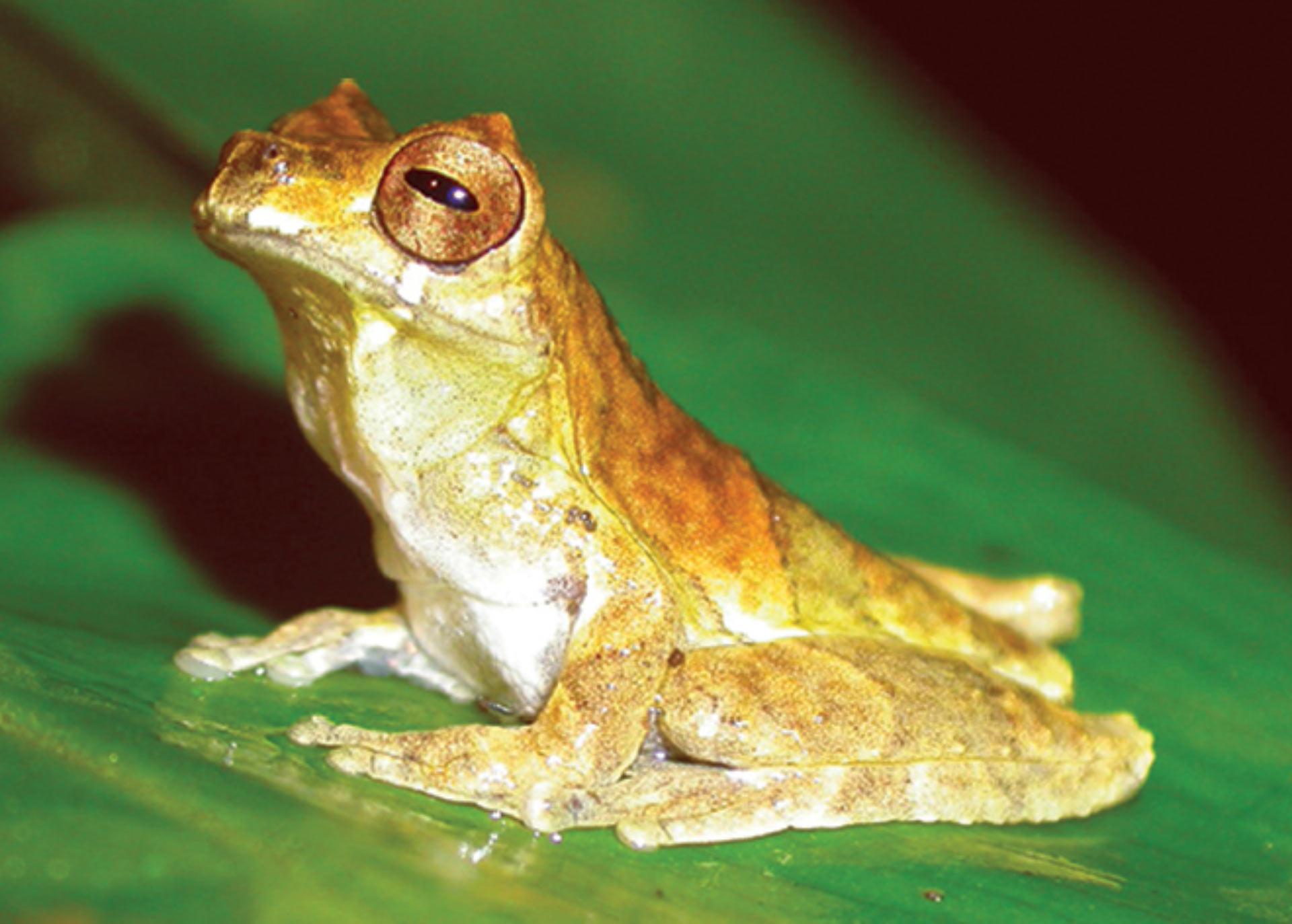 дети виды жаб фото и названия парковка