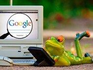 Лягушка с ноутбуком