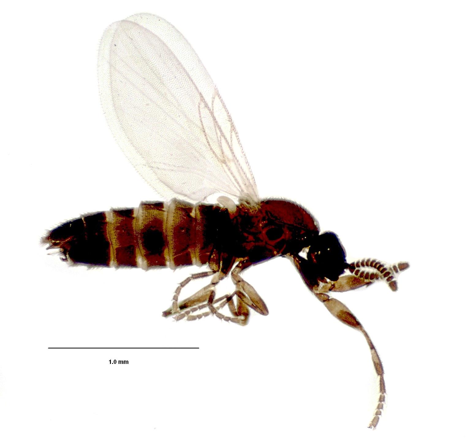 Карельские ученые открыли одиннадцать видов живущих в упавших деревьев насекомых