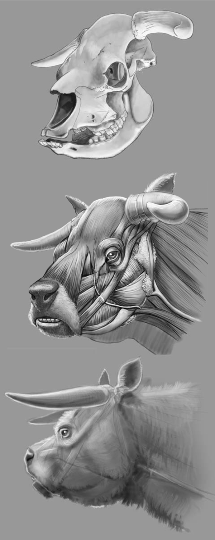 Корова ньята