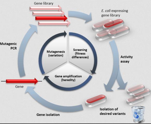 Нобелевская премия по химии: проведем эволюцию сами