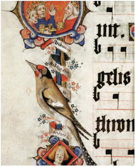 Восхитительные птицы