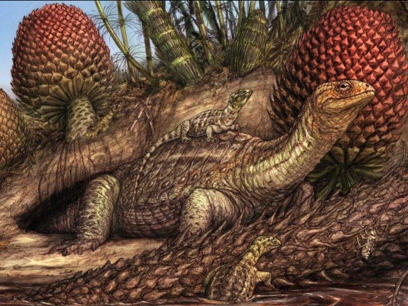 Признаки рака кости обнаружены в окаменелости возрастом 240 миллионов лет