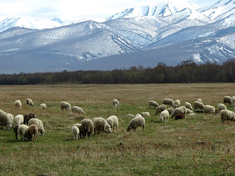 Кавказская утечка