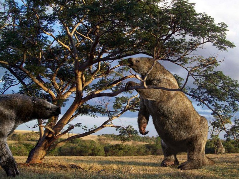 Зуб древнего гигантского ленивца рассказал о его питании в разные сезоны