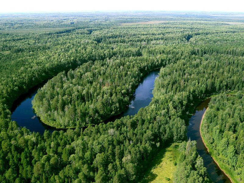«Роснефть» высадила миллион деревьев