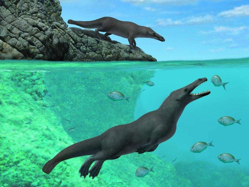 Окаменевший скелет четвероногого предка китов найден в Перу