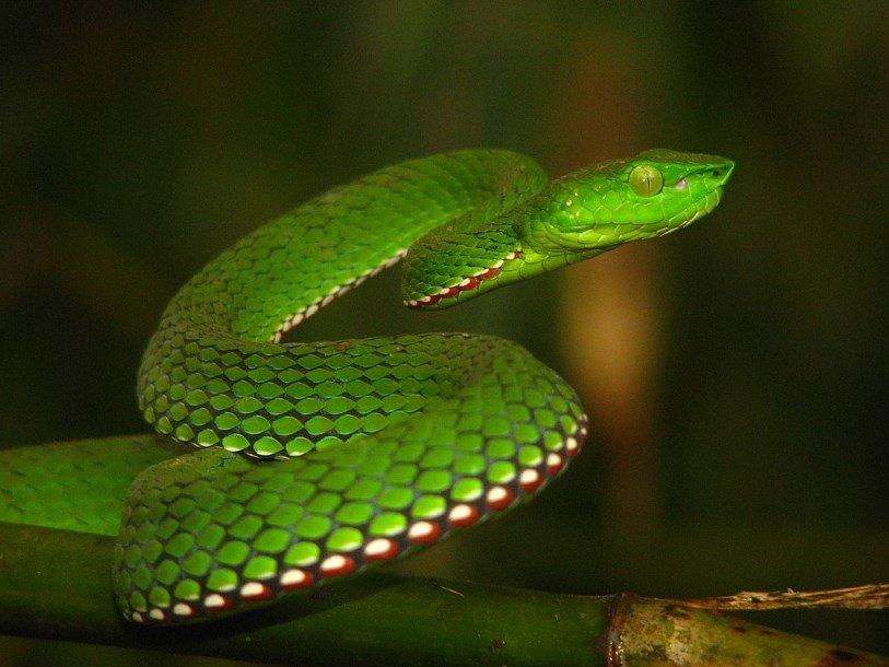 На поиск противоядий от яда змей выделили 80 миллионов фунтов стерлингов