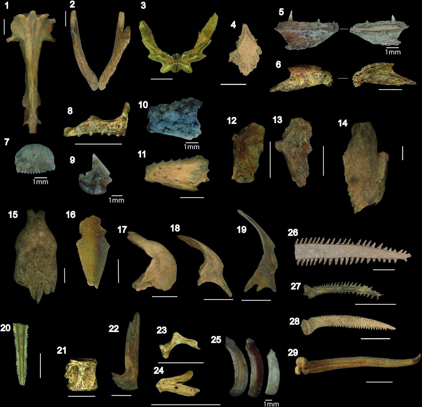 Тысячу лет назад жители Боливии разводили рыбу в искусственных водоемах