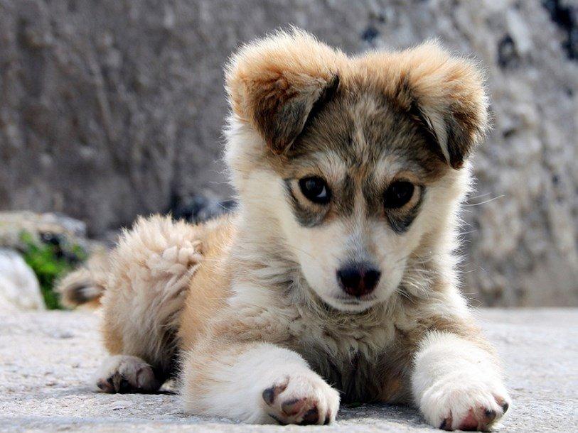 У собак и хозяев синхронизируется уровень гормона стресса