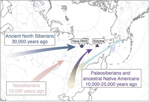 Гены, Сибирь и Америка