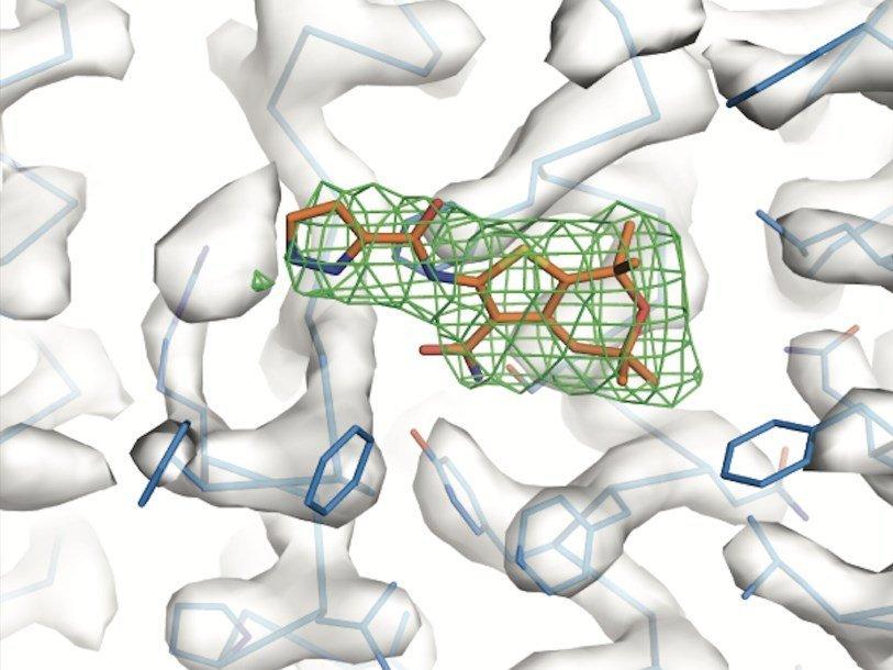 Изучения взаимодействия белков поможет создать лекарства против муковисцидоза