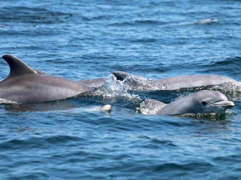 Дельфин аппарат