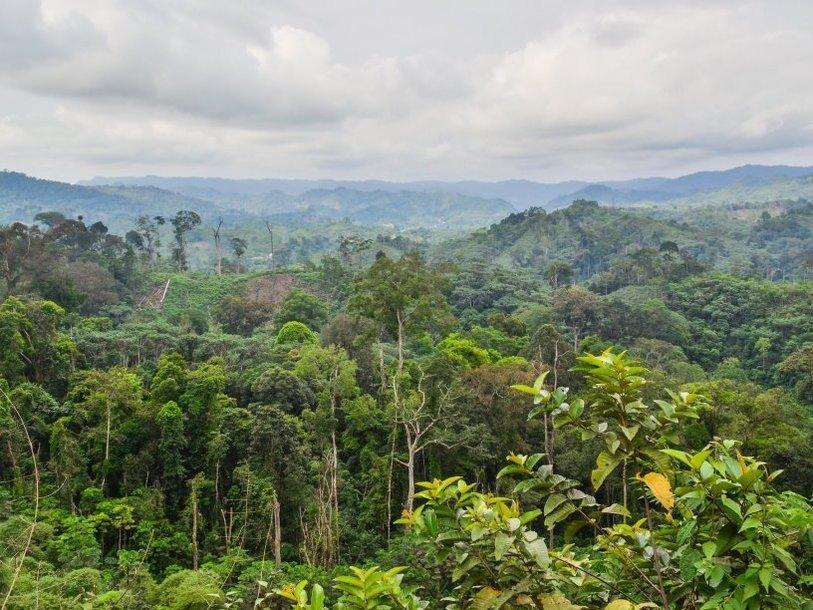 Тропический лес на территории департамента Куилу на юго-востоке Республики Конго.