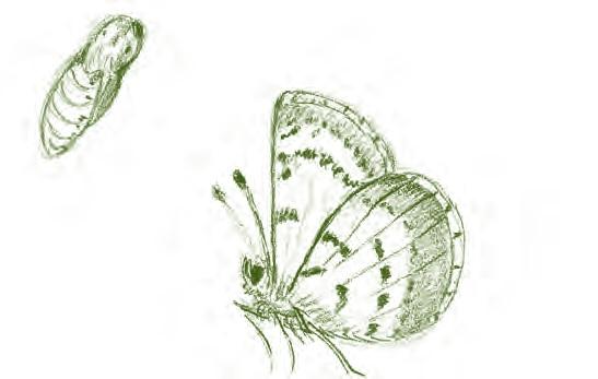 Лето. Секреты выживания растений и животных в эпоху изобилия